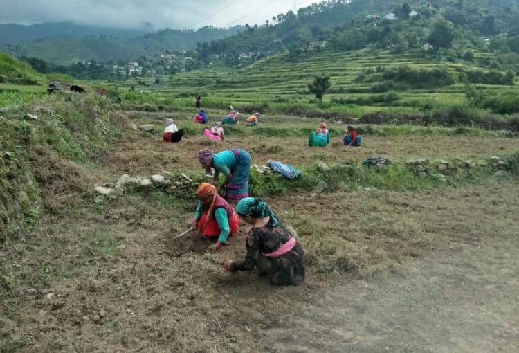 Pauri Gharwal INDIA - Project Cooperative Farming AGRARI (2)
